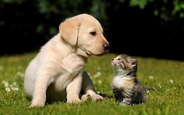 Παγκόσμια Ημέρα των Ζώων – Τα οφέλη της συμβίωσης με ένα κατοικίδιο!