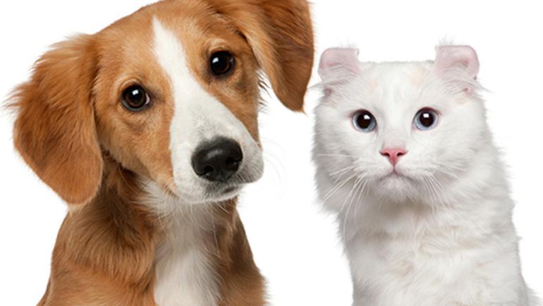 Φυσικό προστατευτικό κολάρο για σκύλους και γάτες