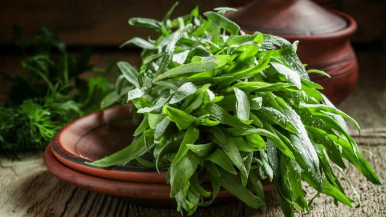 Εστραγκόν: Το βότανο που δυναμώνει σώμα και πνεύμα! Όλες οι λεπτομέρειες!