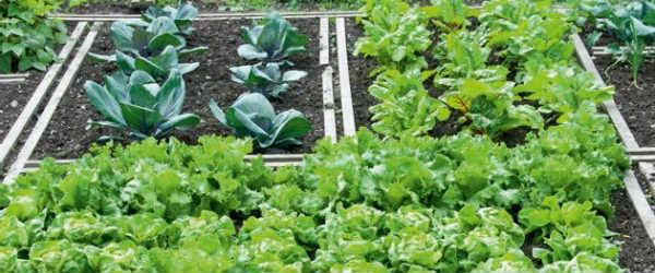 Προστατεύστε τα λαχανικά σας από τη ζέστη